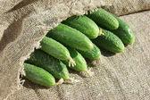 Rijp komkommer in tuin — Stockfoto
