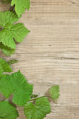 Grapevine on a wooden background — Stockfoto
