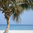 Palm tree on beach — Stock Photo