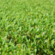 Background of the manicured green bushes - Stock Photo