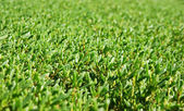 Tle utrzymanych zielone krzewy — Zdjęcie stockowe