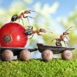 Stock Photo: Ants deliver red currant with trailer of sunflower seeds
