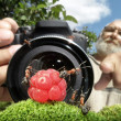 Macro photographer managing  ants — Stock Photo