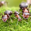 Ants always mean family relations - Stock Photo
