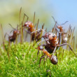 Ants protect little ones - Stock Photo