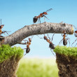 Foto Stock: Team of ants constructing bridge, teamwork