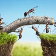 Team of ants constructing bridge, teamwork - Stock Photo