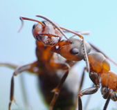 Tender greetings of ants — Photo