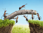 Team of ants constructing bridge, teamwork — Стоковое фото