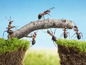 橋、チームワークを構築するアリのチーム — ストック写真