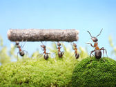 Ants, team work management — Стоковое фото