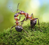 Two ants, warm dreetings — Stock Photo