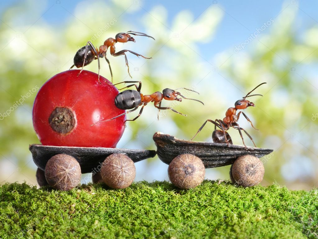 Team of ants delivers red currant with trailer of sunflower seeds, teamwotk — Foto Stock #7438494