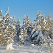 Winter snow-covered forests landscape — Stock Photo