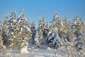 Winter snow-covered forests landscape — Stok fotoğraf