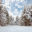 Winter forest landscape — Stock fotografie