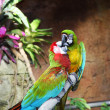 Two colorful parrots are sitting on the branch of a tree and kis - Photo