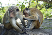 Two monkey — Stock Photo