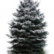 Fir tree — Stock Photo #6889836