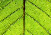 Structure of leaf — Foto de Stock