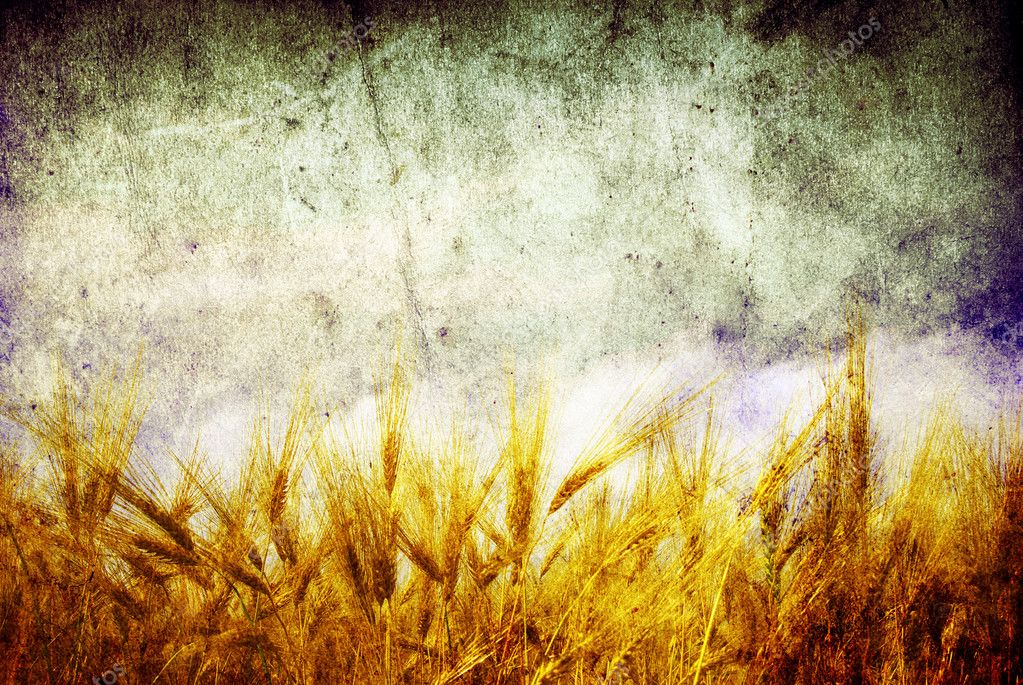 Wheat ears against the blue  sky — Foto de Stock   #6889814