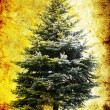Fir tree — Stockfoto #6974182
