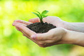 Plant in the hand — Stock Photo