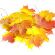 Autumn maple leafs — Stock Photo #7027083