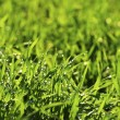 Green lawn — Stock Photo #7060785