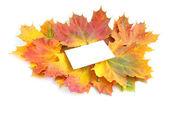Autumn maple leafs — Stock Photo