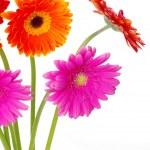 Flowers gerberas — Stock Photo #7151514