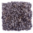 Seeds on white — Stock Photo