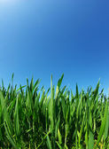 Lawn on sky — Stock Photo