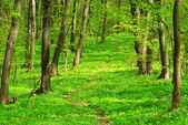 Green forest background — Stock Photo