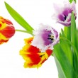 Stock Photo: Tulips