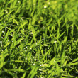 Green lawn — Stock Photo #7337191