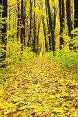 秋天的森林 — 图库照片