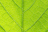 Leaf background — Stockfoto