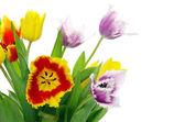 Tulips — Foto de Stock