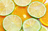 Sliced citrus — Stock Photo