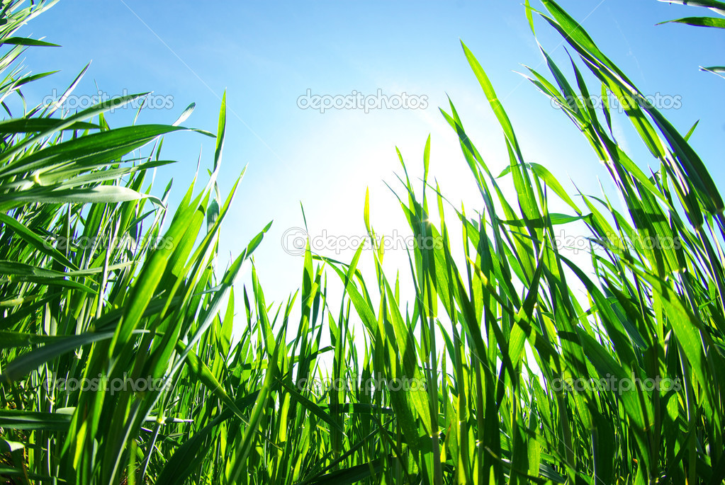 Green grass the blue sky and white clouds — Stock Photo #7465987