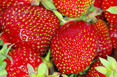 Strawberry texture — Stockfoto