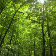 Stock Photo: Sun in forest