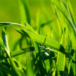 Grass texture - Stock Photo