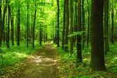 Forest background — Photo