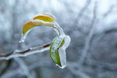Branch with ice — Stock Photo