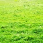 Green grass — Stock Photo #7742999
