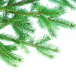 Fir tree branches — Stock Photo #7912158