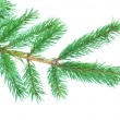 Fir tree branches — Stock Photo #7948529