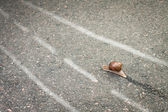 Snail moving its own way concept — Stock Photo
